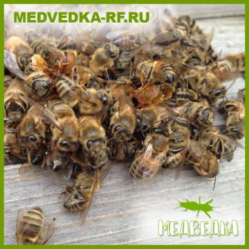 Пчелиный подмор 50гр.
