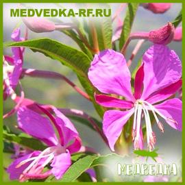 Иван-чай (50гр)