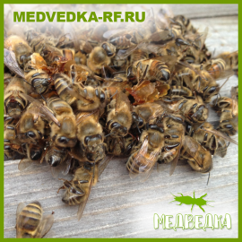 Подмор пчелиный (50гр)